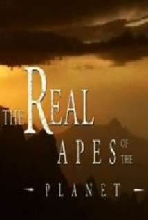 The Real Apes Of The Planet