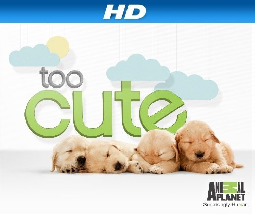 Too Cute!: Season 1